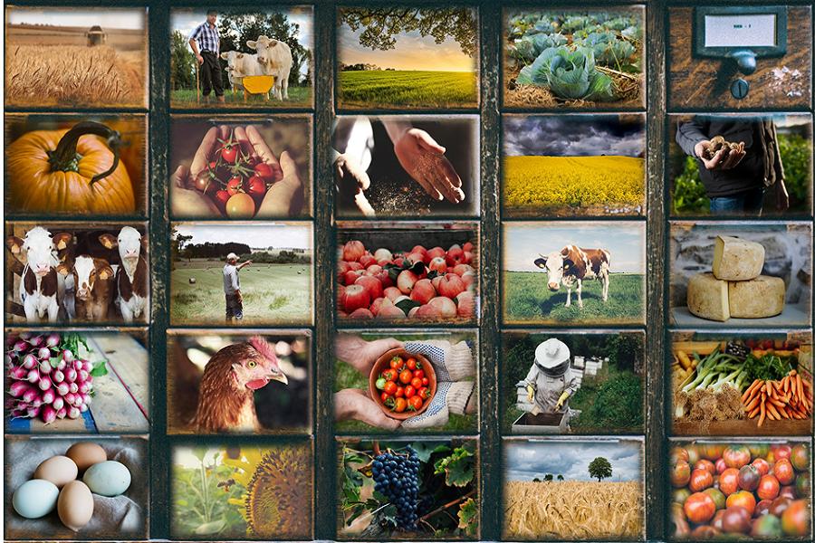 image Montage_acteurs_agriculture__bis.png (1.3MB) Lien vers: CataloguE